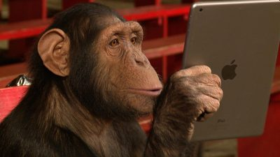ipad magic chimp