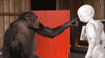 Chimpanzee reacts to Robot - by iPad Magician Simon Pierro